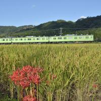 ハザ掛けの田圃を行く奈良線(103系)