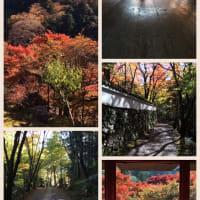 京都紅葉2016 高雄