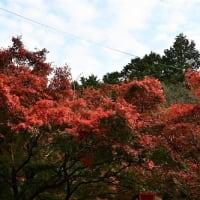 たつの市 東山公園 紅葉 '19