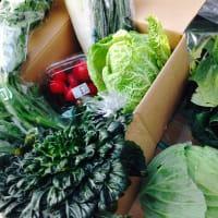 田舎暮らしのメリット、野菜がおいしい!