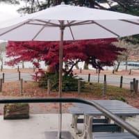 紅葉とShozo Cafe