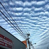 今日のうろこ雲凄かった❣️