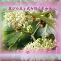 『 喜びの友と成り行く冬の虫 』瘋癲老仁妄句130-01hrz08