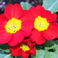 早春を告げる花‥⑤