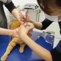 猫たちが風邪引いて治療しました