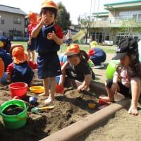 ~きく組~ 砂場遊びをしました!