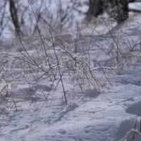 💖雪の中へ💖
