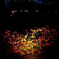 7700 暗い庭