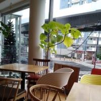 横浜・金沢八景:カフェ「BLUE TREE CAFE」さんを知っていますか?