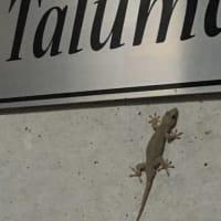 Talumache Arrowの主です(^^;