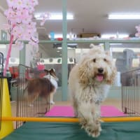 4月の【パピーパーティー】のご案内です☺  犬のしつけ教室@アロハドギー