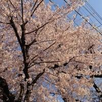 東京オリンピック延期「未体験の異次元ゾーン」「増える業務、ぞっと」戸惑う都職員