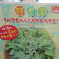 New 今年の秋野菜初販売!予約受付中!
