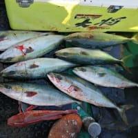ジギング結果貧漁報告