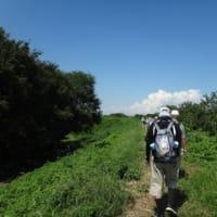 【東松山ウォーキング・ウォーキングセンター】ふるさと自然のみちウォーク「高坂七清水コース」〔17km〕(2019-9-10)