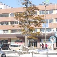 扁形の要因はなぜ 釧路駅前のイチイ樹木