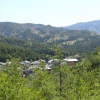 まつたけ山復活させ隊 NEWSLETTER 1406  雲一つない快晴、暑い位の1日でした! 香川山地温は14℃ マツタケ菌根は大喜び!