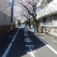 夫の思い出の通学路、成城の街散歩