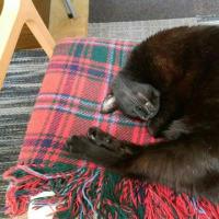 書くことがなかったので、黒猫プラの話題でお茶を濁す!