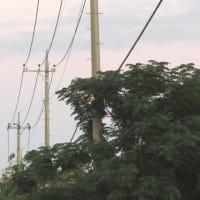 最近の電柱は上が細い