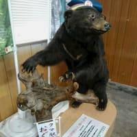 外出中クマが留守番してる駅