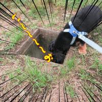 台風のつめ痕!ルイスが見つけた穴とは?