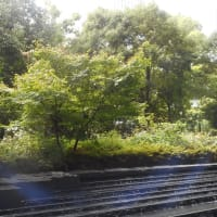 木々・草花・水の音に癒しの時~堂島の杜~(3)
