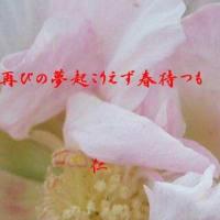 『 再びの夢起こりえず春待つも 』瘋癲老仁妄詩zrd1902