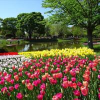 「チューリップガーデン」/昭和記念公園
