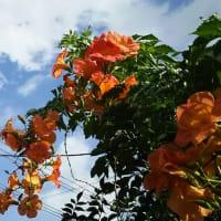 暑かった夏、秋の気配と残暑の花