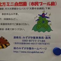 『春の水辺の自然観察』が2月22日に開催されるよう@北方ミニ自然園(市川市民プール前)