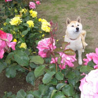 〜ようこそ、ゆず庭バラ園へ〜♪