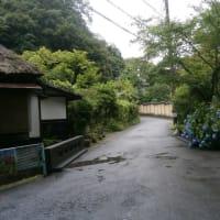 雨の明月院