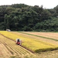 稲刈りの季節。