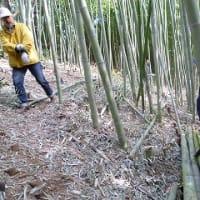 竹を刈りに
