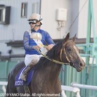 キングニミッツ 埼玉新聞栄冠賞に出走しました。