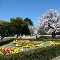 新宿御苑 観桜会での景色・・・    布製、帯締め入れ・帯締め収納ケース「優舞美」