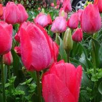 雨に濡れる花たち