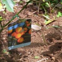 5/12 エリア6に植えられた苗木など