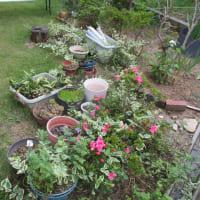 庭の手入れ計画