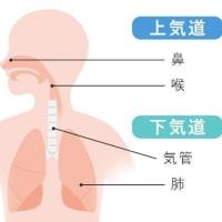 正しい呼吸が出来ていますか? チェックしてみましょう😁