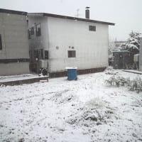雪が積もった朝