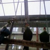 「掛川花鳥園」に行きました。3