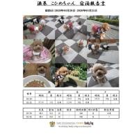 愛犬をケージ(檻)に入れないペットホテル 「こひめちゃん」のお泊り 20/03/21