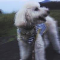 ジ・アウトレットに行っていたので,とっぷりと日が暮れてからの散歩になりました。