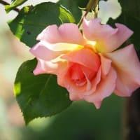 くりはま花の国3~花散歩