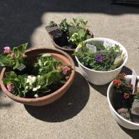 庭作り52眺める花壇③・・花を植える。