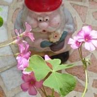 JulieDayの花々
