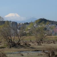 荒れた川と富士山…多摩川春景色シリーズ