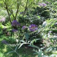 花友ガーデンの虫たち